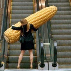 Corn's coming!