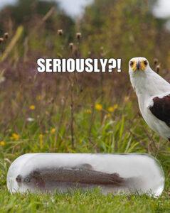 Trolling a bird